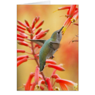 Hummingbird surrounded by red yucca card