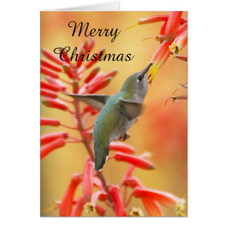 Hummingbird surrounded by yucca, Merry Christmas Card
