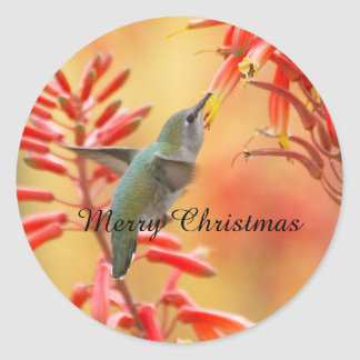 Hummingbird surrounded by yucca,Merry Christmas Classic Round Sticker