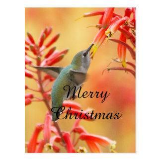 Hummingbird surrounded by yucca,Merry Christmas Postcard