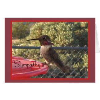 Hummingbird Sympathy Card for Anyone