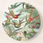 Hummingbird (Trochilidae) by Haeckel Coaster