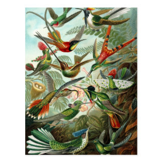 Hummingbird (Trochilidae) by Haeckel Postcard