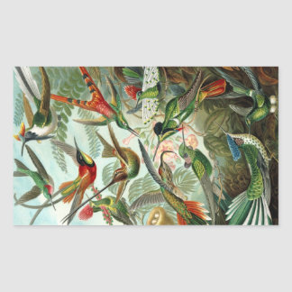 Hummingbird (Trochilidae) by Haeckel Rectangle Sti Sticker