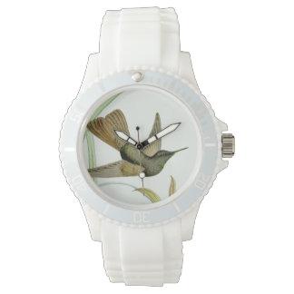 Hummingbird Watch