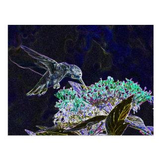 Hummingbirds 105a postcard
