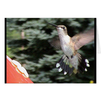 Hummingbirds 2005-0919 card