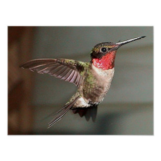 Hummingbirds 2005-0948 poster