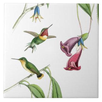 Hummingbirds Birds Flowers Floral Animals Wildlife Tile