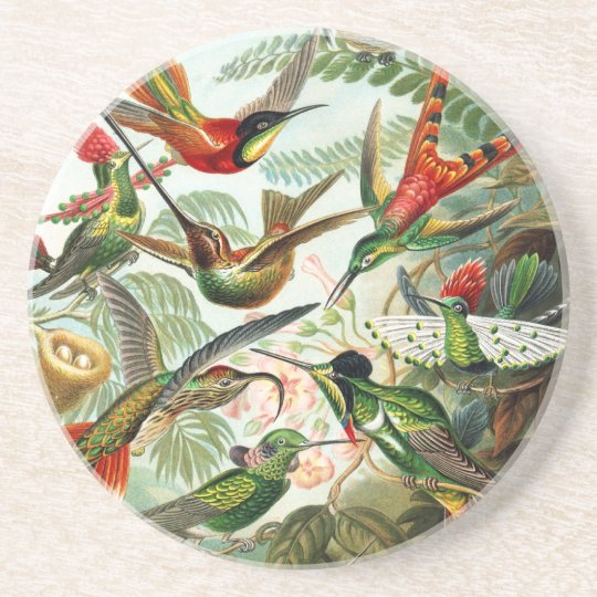 Hummingbirds by Ernst Haeckel Coaster