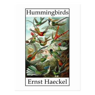 Hummingbirds by Ernst Haeckel Postcard