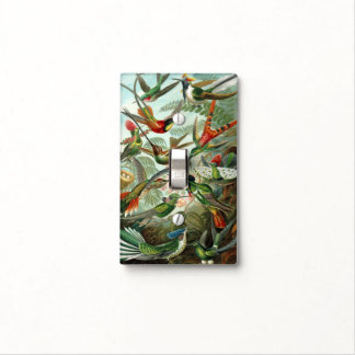 Hummingbirds by Ernst Haeckel, Vintage Birds Trees Light Switch Cover