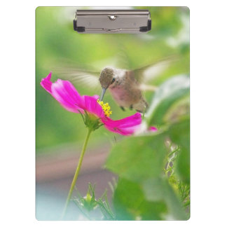 Hummingbirds Flowers Birds Wildlife Animals Floral Clipboard