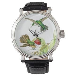 Hummingbirds Watch