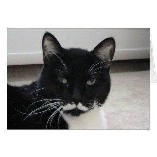 Humor Tuxedo Cat Birthday Card ( template)