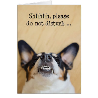 Humorous Birthday Card - Dog Wearing Silly Grin