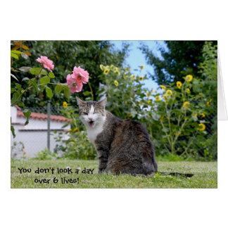 humorous birthday tabby cat card