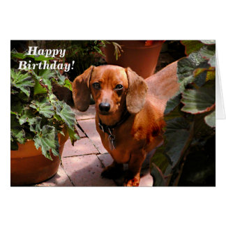 Humorous Dachshund Birthday Card