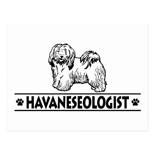 Humorous Havanese Post Cards