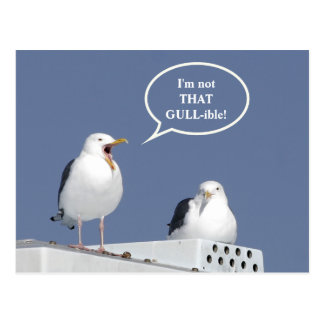 Humorous Yelling Seagull Funny Post Card