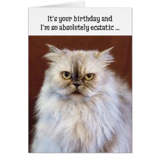 Humourous Birthday Card - Ecstatic Persian Cat