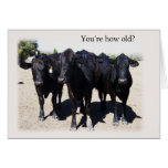 "Humourous Cow ""Getting Older"" Birthday Card"