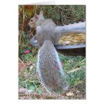 Humourous Squirrel Card