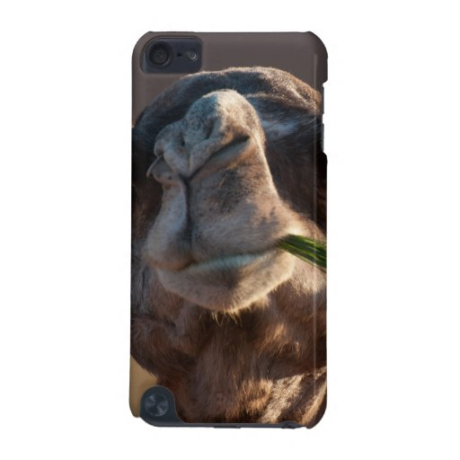 Hump Day Camel Feasting on Green Grass iPod Touch 5G Case