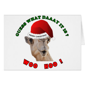 hump day camel merry christmas greeting cards