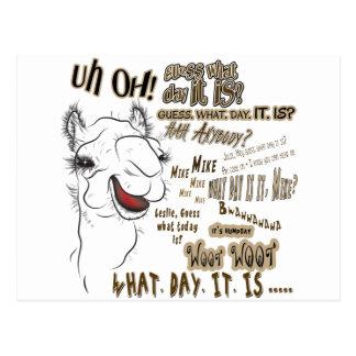 Hump Day Camel Postcard