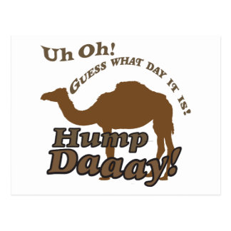 Hump Day Camel! Postcards