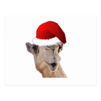 Hump Day Camel Santa Claus Hat Post Cards