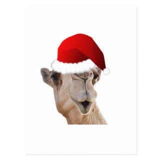 Hump Day Camel Santa Claus Hat Post Card