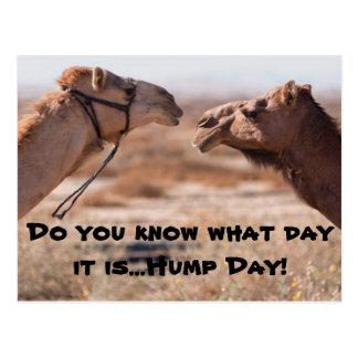 Hump Day Camels Postcard
