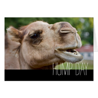 Hump Day Customizable Text Camel Greeting Cards