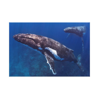 Humpback Mother & Calf Canvas