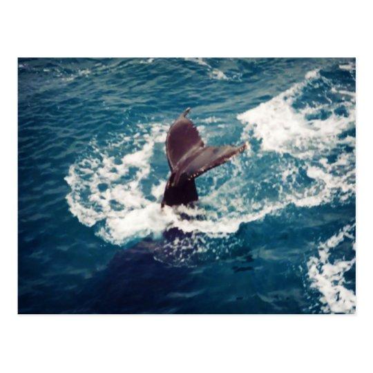Humpback Tail, postcard
