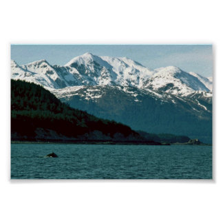 Humpback Whale Breaching in Southeast Alaska Poster