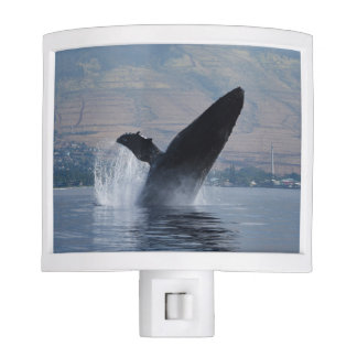 humpback whale breaching night lights