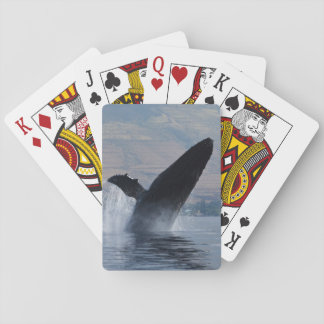 humpback whale breaching playing cards