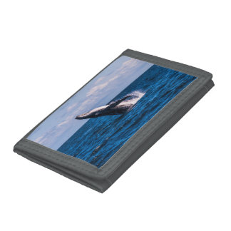 Humpback Whale Breaching Surfers Paradise Trifold Wallets