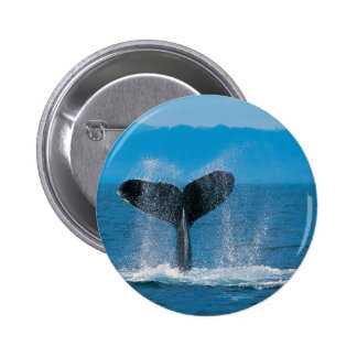 Humpback Whale Pinback Buttons