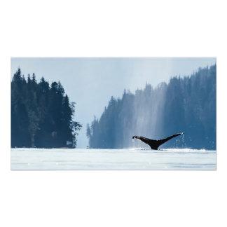 Humpback Whale Dives in Haida Gwaii, B.C. Photo Print