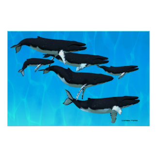 Humpback Whale Family Print