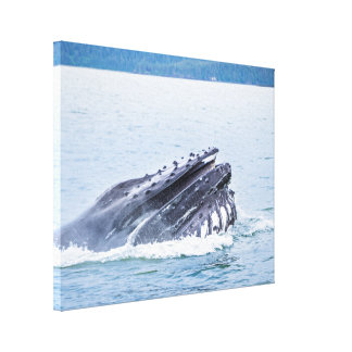 humpback whale in alaska canvas print