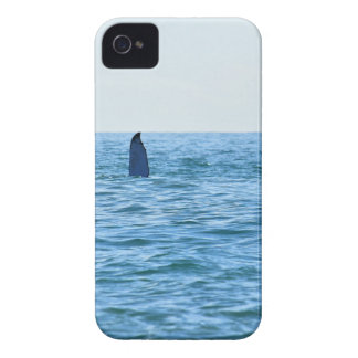 HUMPBACK WHALE MACKAY QUEENSLAND AUSTRALIA Case-Mate iPhone 4 CASE