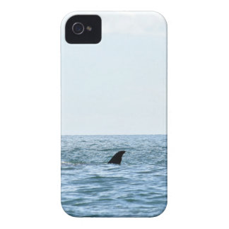 HUMPBACK WHALE MACKAY QUEENSLAND AUSTRALIA iPhone 4 CASES