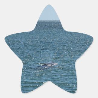 HUMPBACK WHALE MACKAY QUEENSLAND AUSTRALIA STAR STICKER