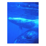 Humpback Whale Mother and Calf Post Card