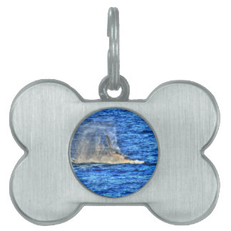 HUMPBACK WHALE QUEENSLAND AUSTRALIA ART EFFECTS PET TAGS